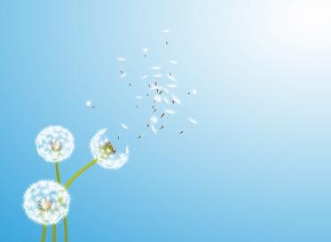 dandelion-wind